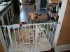 cage-free-dog-boarding-phoenix-063