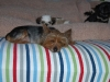 Contact Heidi\'s Historic Home & Pet Care for Phx Pet Sitting, Phx Dog Walking, Phx Dog Boarding, And Phx Doggie Day Care... Heidi was voted the #1 Pet Sitter in All of Arizona!