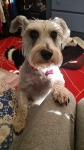 Doggie Day Care Heidis Historic Home & Pet Care9