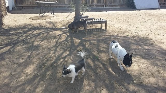 doggie-day-care-boarding-in-phx-with-heidis-historic-home-pet-care