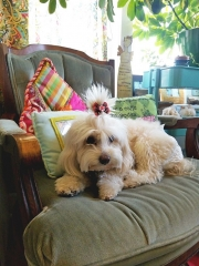 Doggie Day Care with Heidi's Historic Home & Pet Care Phoenix
