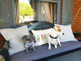 Doggie Day Care with Heidi's Historic Home & Pet Care Phoenix3