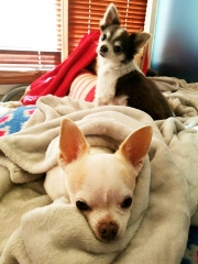 Heidi's Historic Home & Pet Care-Best Pet Care Provider in Phoenix!