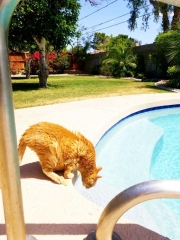 Pet Sitting with Heidi's Historic Home & Pet Care Phoenix9