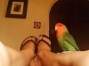 Bird Sitting Yoga in Phx with Heidi's Historic Home & Pet Care2