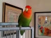 Bird Sitting in Phx with Heidi's Historic Home & Pet Care5