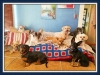 Doggie Day Care Phoenix with Heidi's Historic Home & Pet Care4