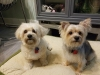 Doggie Day Care with Heidi's Historic Home & Pet Care Phx AZ