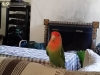 bird-sitting-in-phx-with-heidis-historic-home-pet-care1