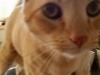 cat-sitting-phoenix-with-heidis-historic-home-pet-care-copy
