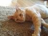 cat-sitting-phoenix-with-heidis-historic-home-pet-care1-copy