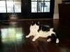 cat-sitting-phoenix-with-heidis-historic-home-pet-care2-copy