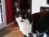 cat-sitting-phoenix-with-heidis-historic-home-pet-care3-copy