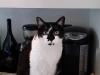 cat-sitting-phoenix-with-heidis-historic-home-pet-care4-copy