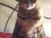 cat-sitting-phoenix-with-heidis-historic-home-pet-care5-copy