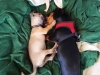 dog-boarding-in-phx-with-heidis-historic-home-pet-care15