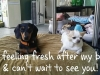 dog-boarding-in-phx-with-heidis-historic-home-pet-care2