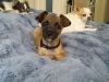 dog-boarding-in-phx-with-heidis-historic-home-pet-care21