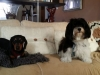 dog-boarding-in-phx-with-heidis-historic-home-pet-care23