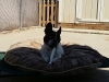 doggie-day-care-boarding-in-phx-with-heidis-historic-home-pet-care2-copy