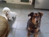 doggie-day-care-boarding-in-phx-with-heidis-historic-home-pet-care23