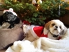 doggie-day-care-boarding-in-phx-with-heidis-historic-home-pet-care31-copy