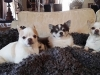 doggie-day-care-boarding-in-phx-with-heidis-historic-home-pet-care5-copy