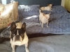 doggie-day-care-boarding-in-phx-with-heidis-historic-home-pet-care6