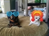 doggie-day-care-phx-with-heidis-historic-home-pet-care-copy