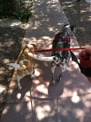 dog-walking-with-heidis-historic-home-pet-care2