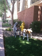 dog-walking-with-heidis-historic-home-pet-care3