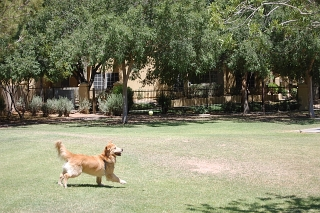 Dog Walker Phx, Dog Walker Downtown Phoenix, Dog Walker Central Phoenix