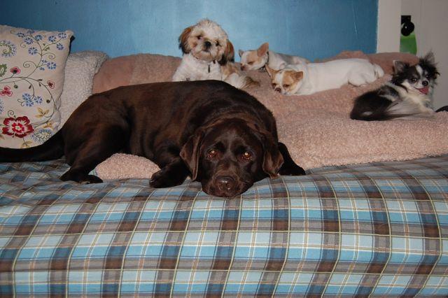 Pet Sitting Arizona S Heidi S Historic Home Amp Pet Care