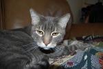 Cat Sitting Phoenix, Pet Sitting Phoenix, Cat Sitting downtown Phoenix, Cat Sitting Central Phoenix, Pet Sitting Downtown Phoenix, Pet sitting Central Phoenix, Pet Sitting Arcadia, Pet Sitting Phoenix Arizona
