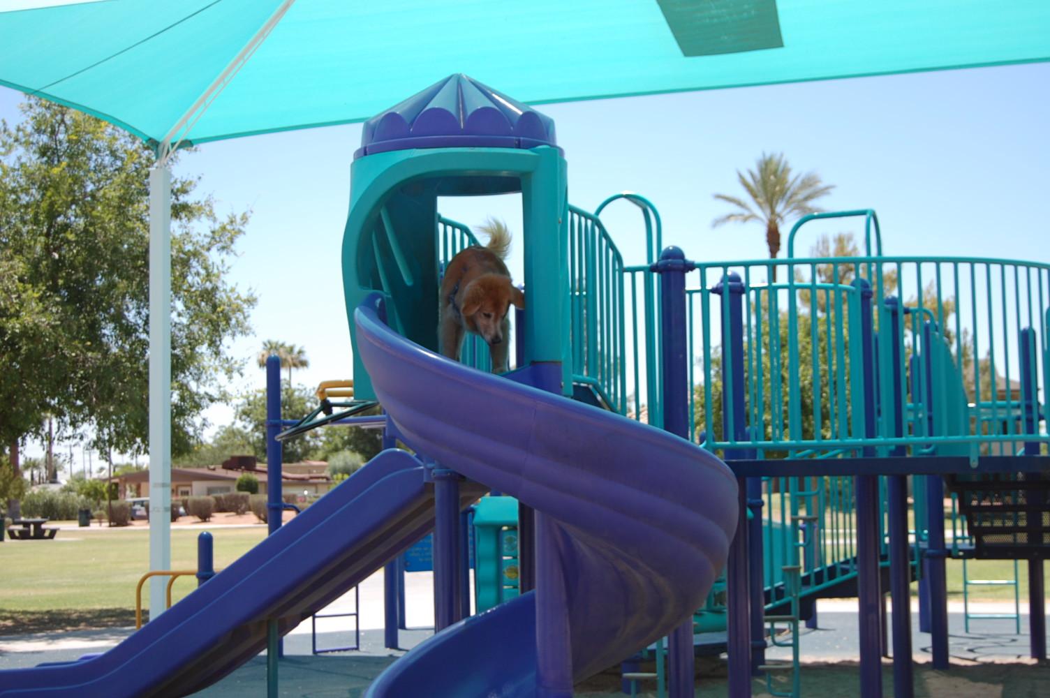 Dog Walker Phoenix, Dog Walker Downtown Phoenix, Dog Walker Central Phoenix, Dog Walker Arcadia, Dog Walker Central Phoenix Corridor
