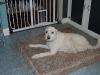 cage-free-dog-boarding-phoenix5