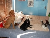 Dog Boarding Phoenix, Dog Boarding Downtown Phoenix, Dog Boarding Central Phoenix, Doggie Day Care Phoenix, Doggie Day Care Downtown Phoenix, Doggie Day Care Central Phoenix