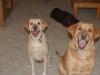 Dog Sitting Phoenix, Dog sitting Dog Sitting Phoenix, Dog Sitting Downtown Phoenix, Dog Sitting Central Phoenix