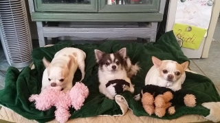Heidi's Historic Home & Pet Care Phoenix