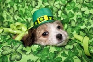 St. Patty\'s Day from Heidi\'s Historic Home & Pet Care