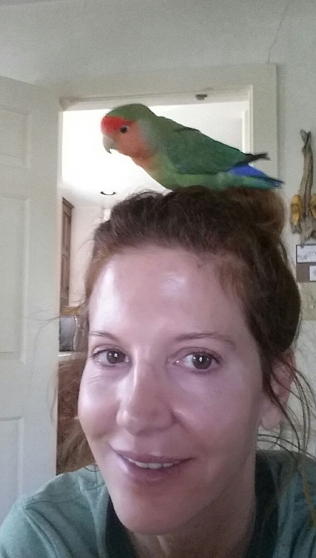 Bird Sitting in Phx with Heidi's Historic Home & Pet Care3