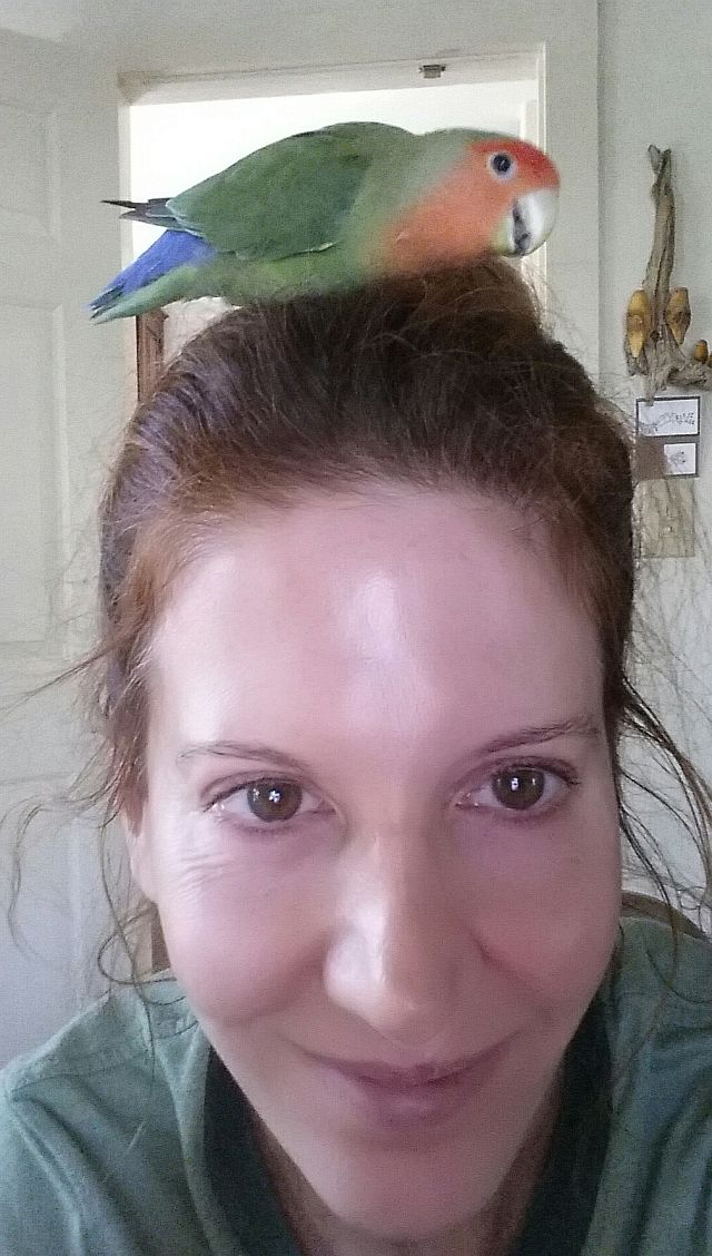Bird Sitting in Phx with Heidi's Historic Home & Pet Care4