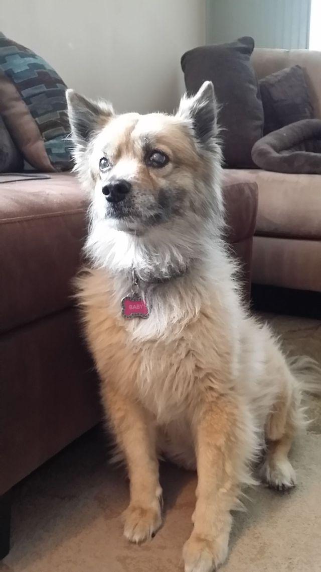 In Home Pet Sitting Since 1998 1 Pet Sitter In Phoenix
