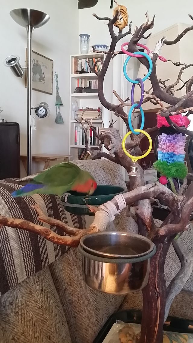 Pet Sitting in Phx with Heidi's Historic Home and Pet Care7