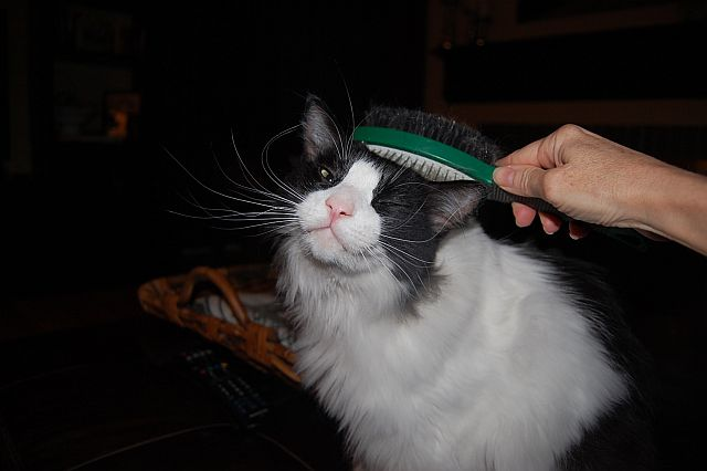 cat-sitting-phx-040