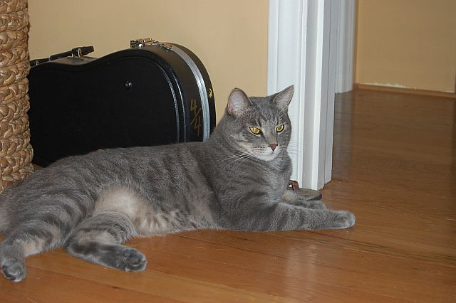cat-sitting-phx-042
