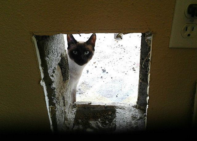 cat-sitting-phx2
