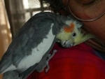 bird-sitting-phx