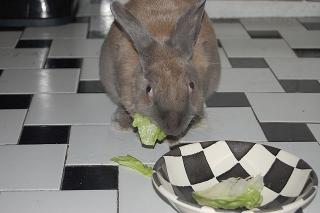 rabbit-sitting-phx-030