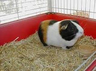 hamster-dog-cat-bird-fish-rabbit-pet-sitting-phoenix-dog-day-care-boarding